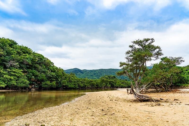 石垣島の吹通川(ふきどうがわ)