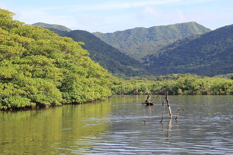西表島の仲間川